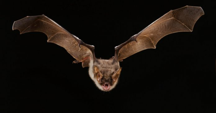 Bat Got Into Your House? Here's What to Do